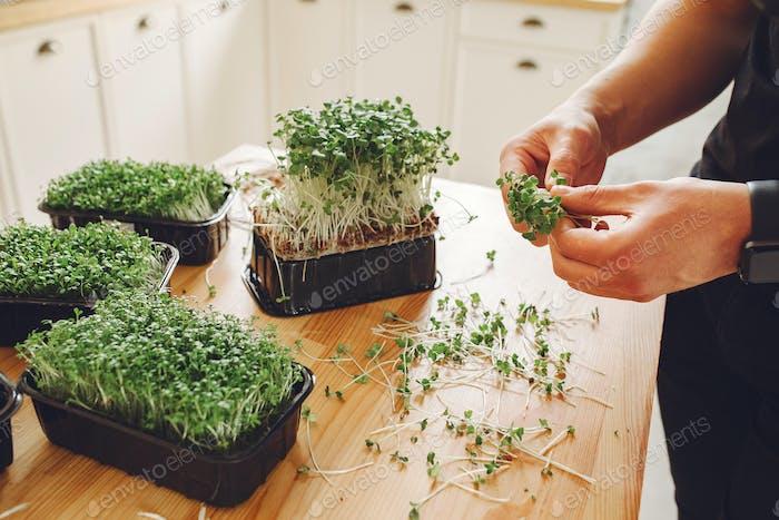 Haufen von Rüben Micro Greens auf dem Tisch Hintergrund