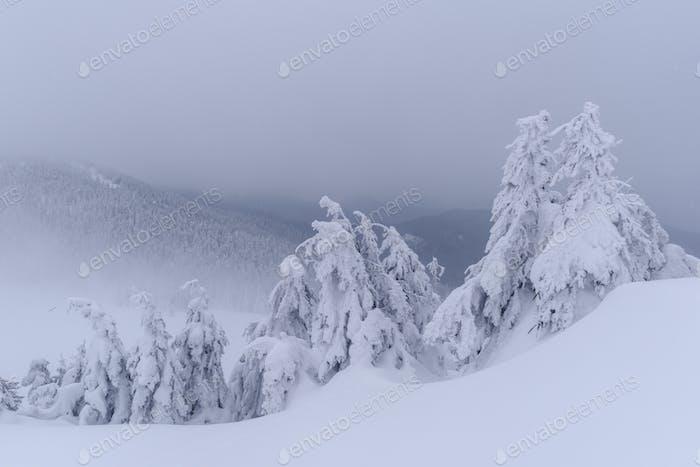 Fantastische Winterlandschaft