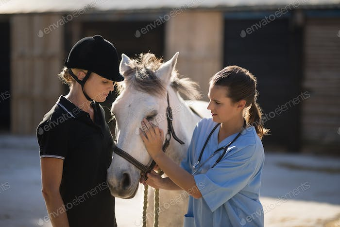 Female jockey looking at vet stroking horse