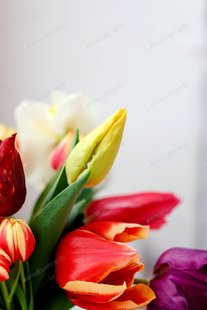 A bunch of tulips on the window. Still life with colorful tulip flowers bouquet  on window sill