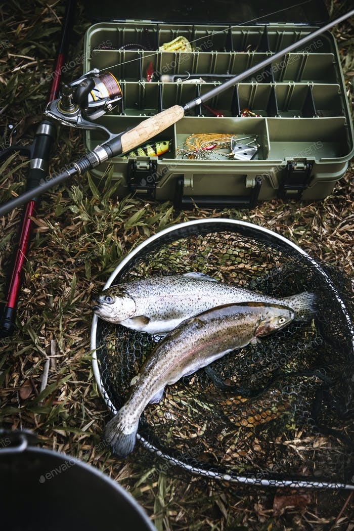 Tackle box and fish on the ground