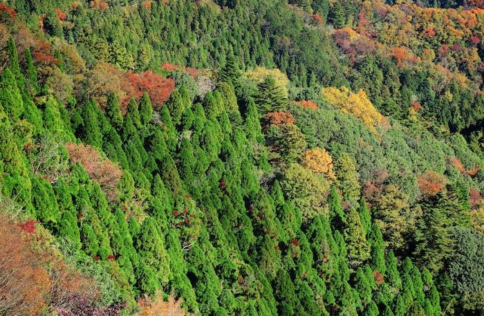 Mountain jungle in Autumn
