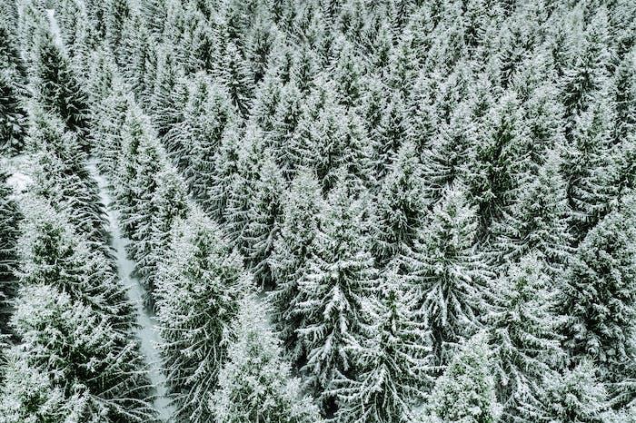 Luftaufnahmen von schneebedeckten Bäumen im Winterwald.