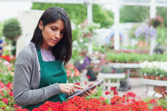 Employee checking red flowers with tablet pc in garden center thougtfully
