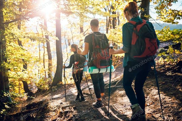 Trekking en el bosque, grupo de amigos con mochilas