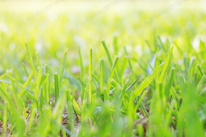 grass with sunlight