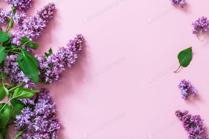 Spring flowers. Frame of twigs of blooming lilac on a pink background