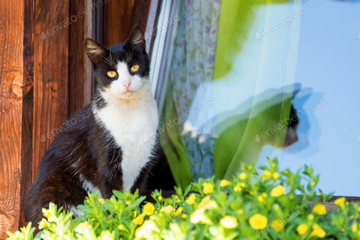 Cat on an old window of wooden house with flowers