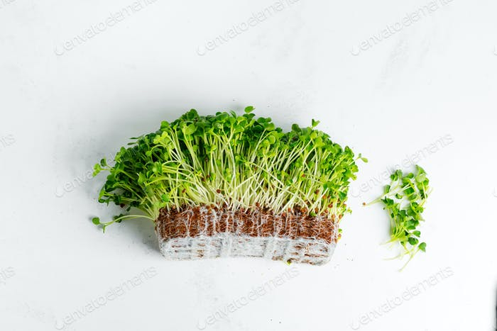 Organic natural microgreen with roots on a light grey marble background
