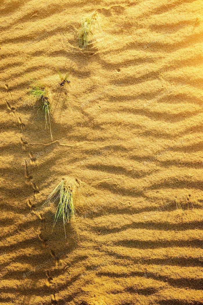 Yellow sand in desert