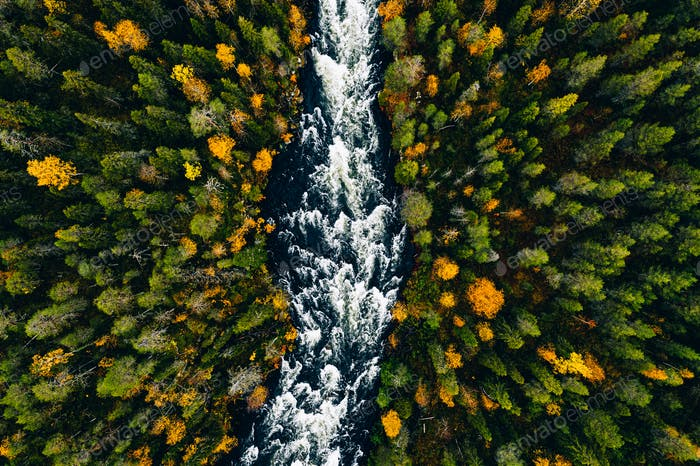 Aerial view of fast river flow through the rocks and colorful forest. Autumn in Finland