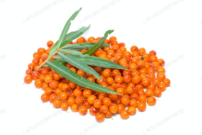 Pile of sea buckthorn berries and some leaves