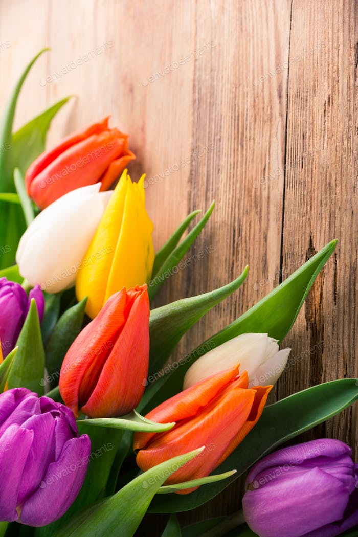 Colorful tulips on old wooden background