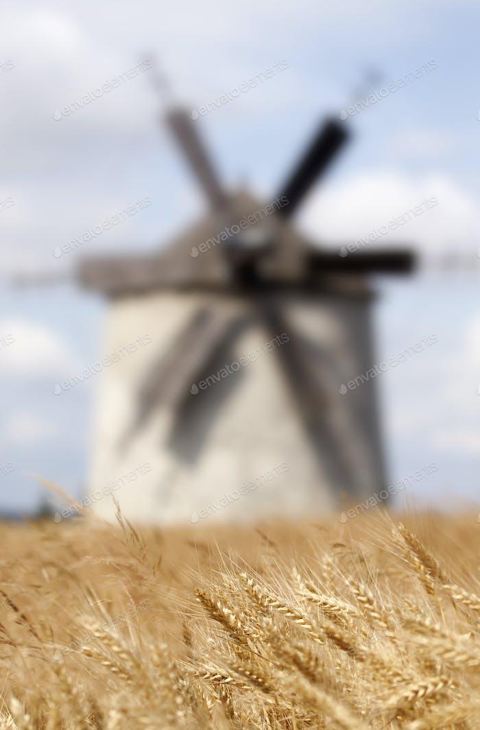 Fondo de campo de cereales