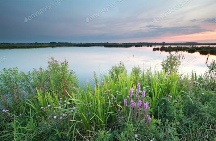 flores silvestres por el lago al atardecer