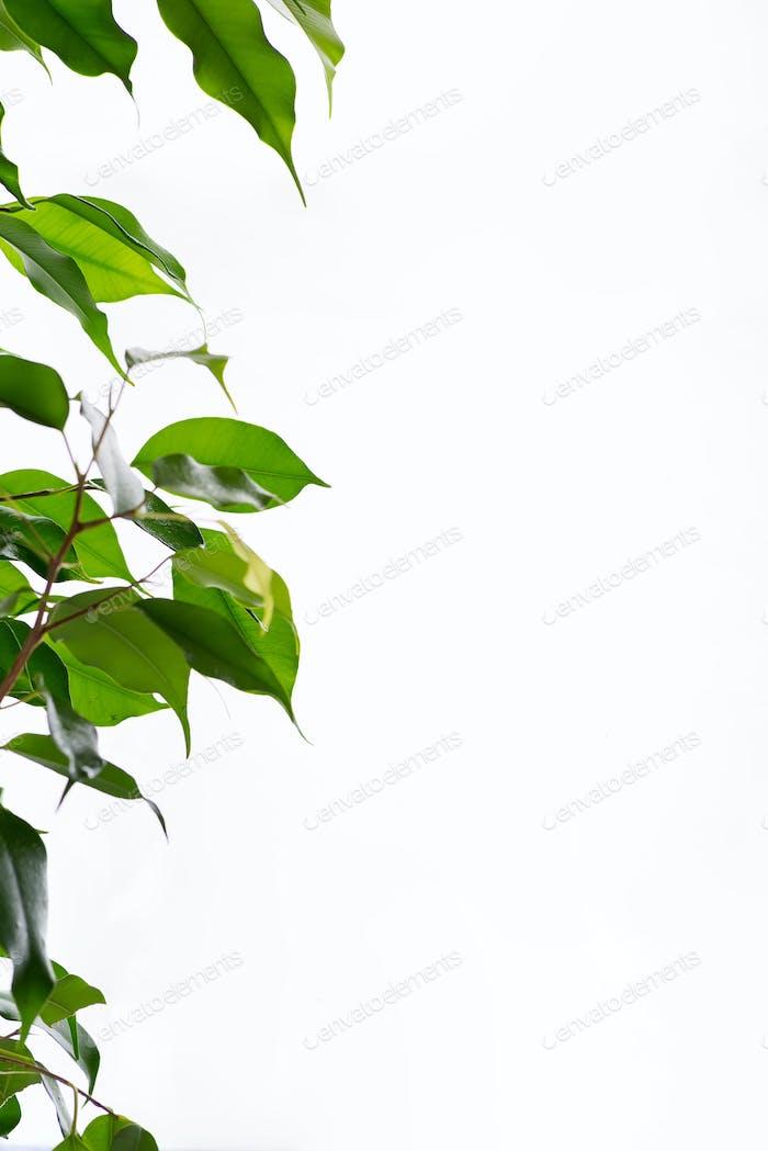 Schöner Rahmen grünes Blatt mit Wassertropfen auf grauem Hintergrund