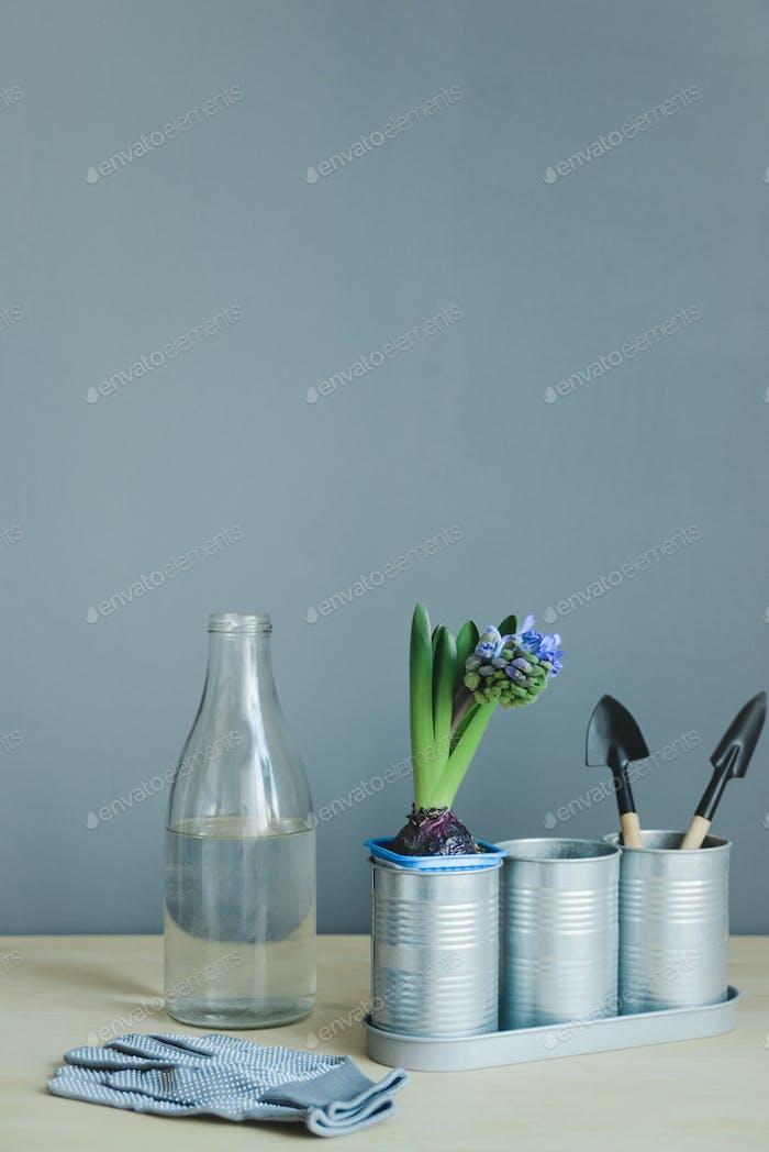 Hyazinthe Mix Pflanze, Gartengeräte, Handschuhe und Glasflasche mit Wasser
