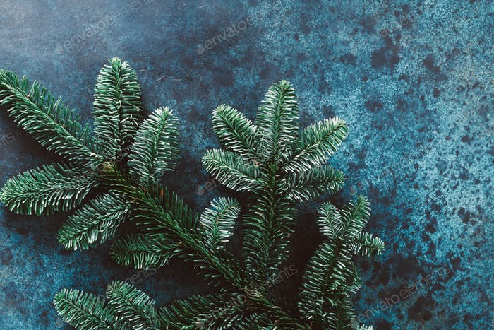 Fir branch on a blue painted background
