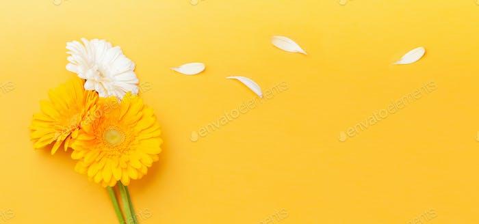 Colorful gerbera flowers and petals