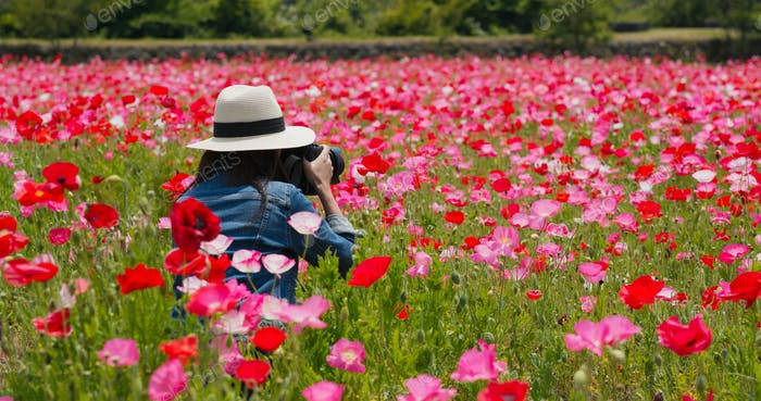 Woman take photo on camera inside poppy flower garden