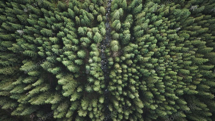 Stone river at pine trees top down aerial. Nobody nature landscape at autumn day. Green fir forest