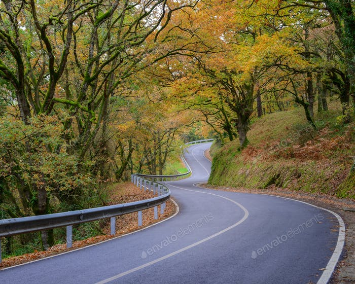 Autumn Forest crossed by an Empty Road