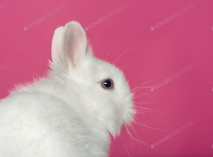 Rabbit on pink background