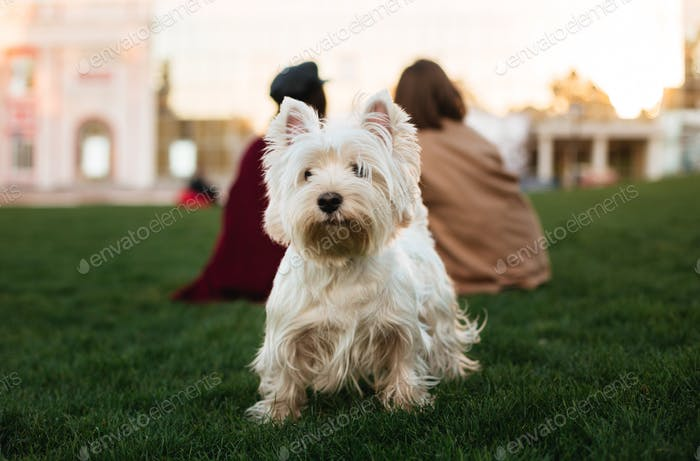 Cute dog standing on grass and looking in camera in park with owner on background