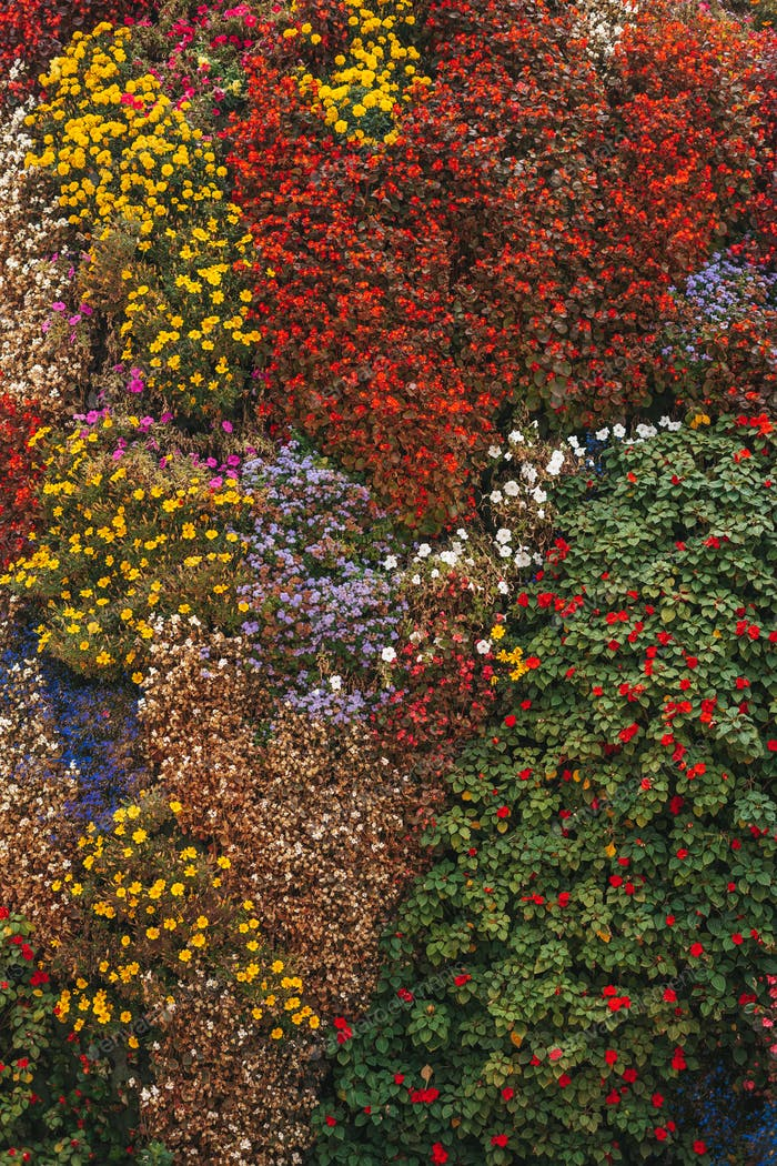 Texture of flowers of different species and colors