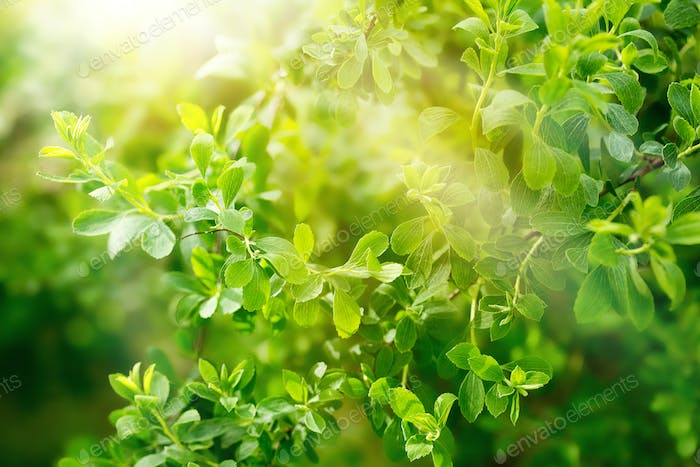green fresh foliage