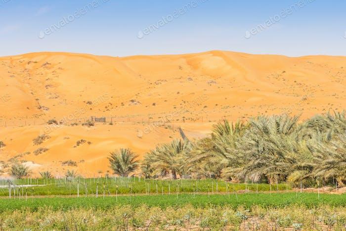 Desert Farm Near Al Ain in the UAE