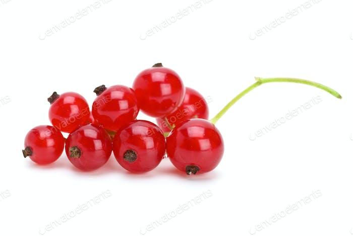 Redcurrants cluster