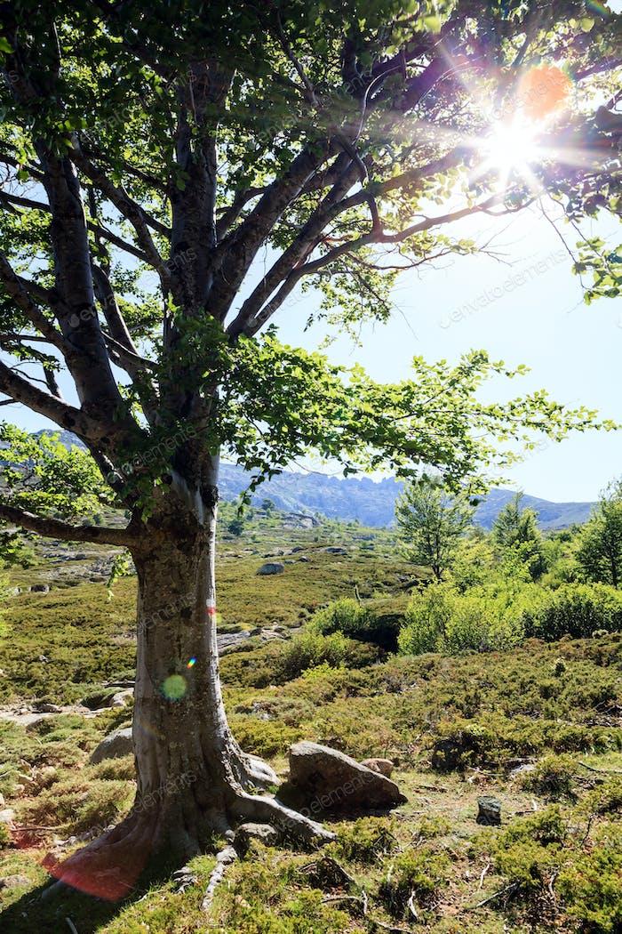 Sonnenuntergang Baum auf Wanderweg in den Bergen