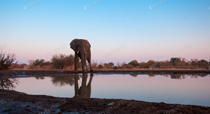 Beautiful Images of of African Elephants in Africa