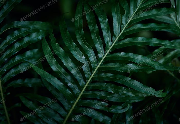 Dark green fern leaves