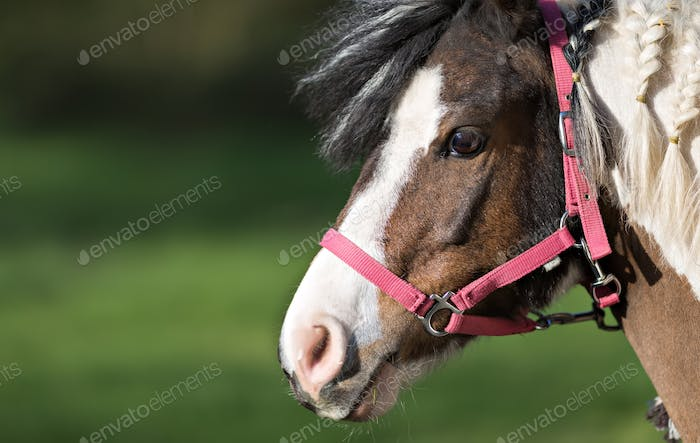 Cute pony in red halter