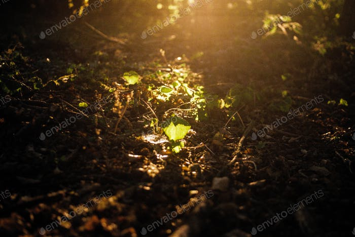 Sunlight on the forest floor