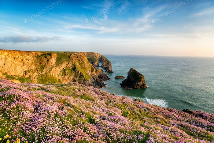 Thrift at Bedruthan in Cornwall