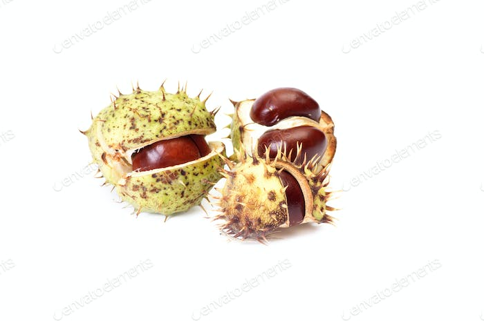 Opened chestnuts on a white.