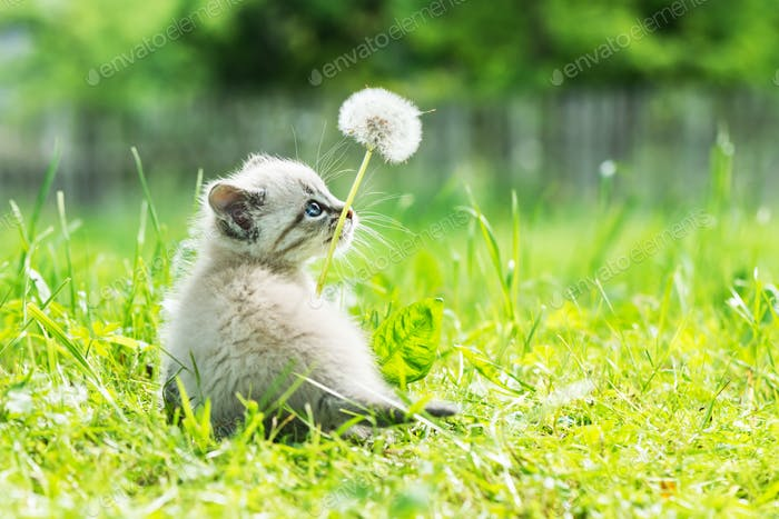 Kleines Kätzchen mit blauem Aye in grünem Gras