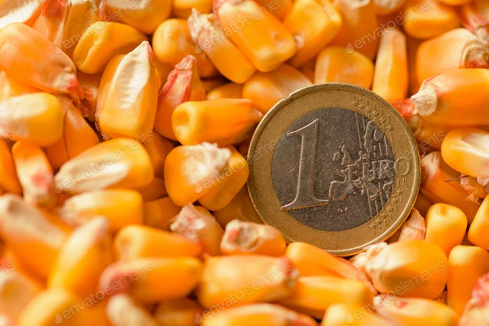 One Euro coin in harvested corn kernels heap