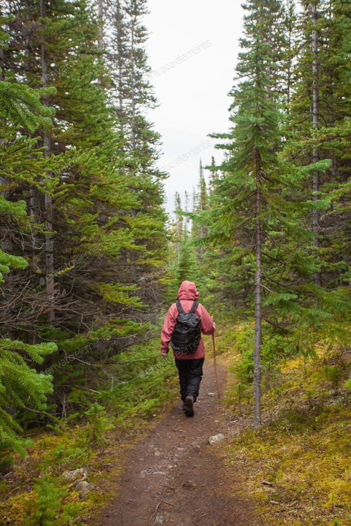 Wandern regnerischen Herbst Herbst boreal Wald Taiga Trail