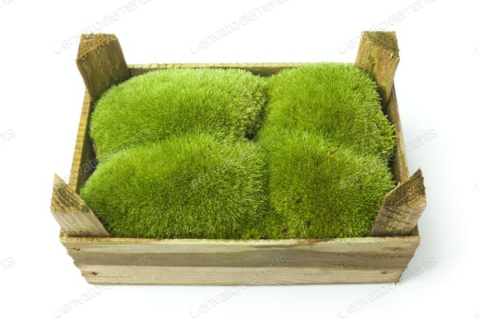 Green moss in a wooden box