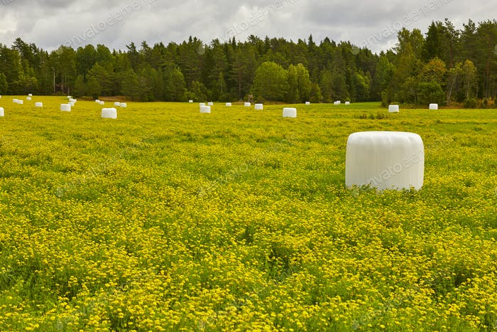 Packed silage on the countryside. Green and yellow landscape. Horizontal