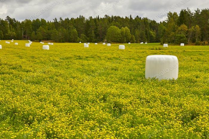 Gepackte Silage auf dem Land. Grüne und gelbe Landschaft. Horizontal