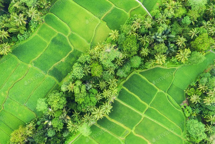 Aerial view of rice terraces. Landscape with drone. Agricultural landscape from the air.