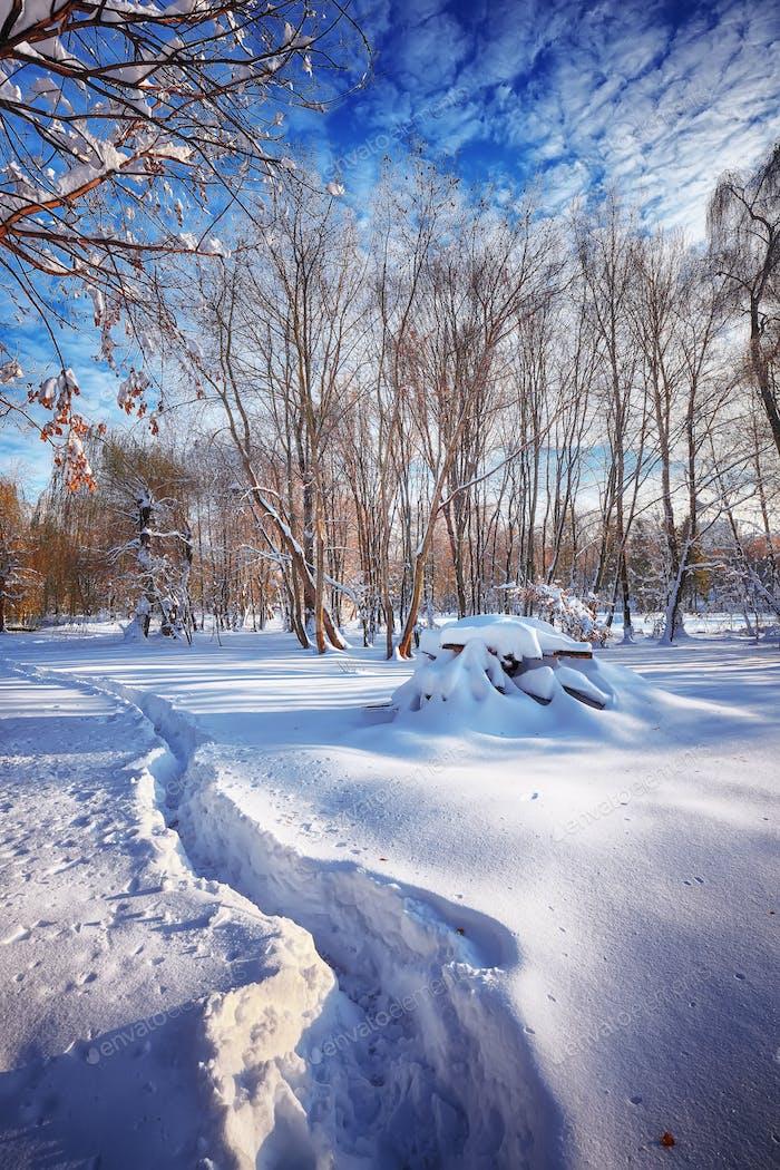 Красивые зимние пейзажи с деревьями в снегу