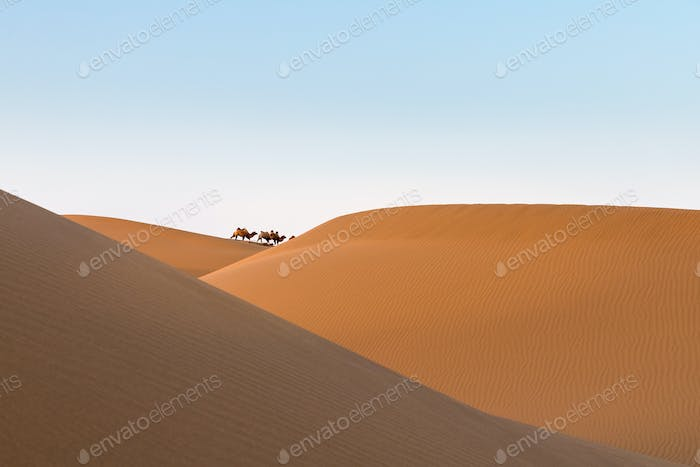 desert landscape at dusk, far away camels and beautiful sand dunes