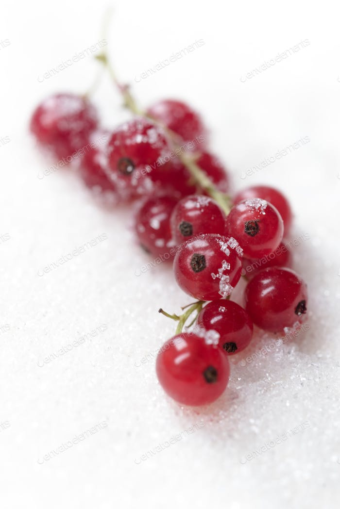 Sweet currant isolated over white sugar background.