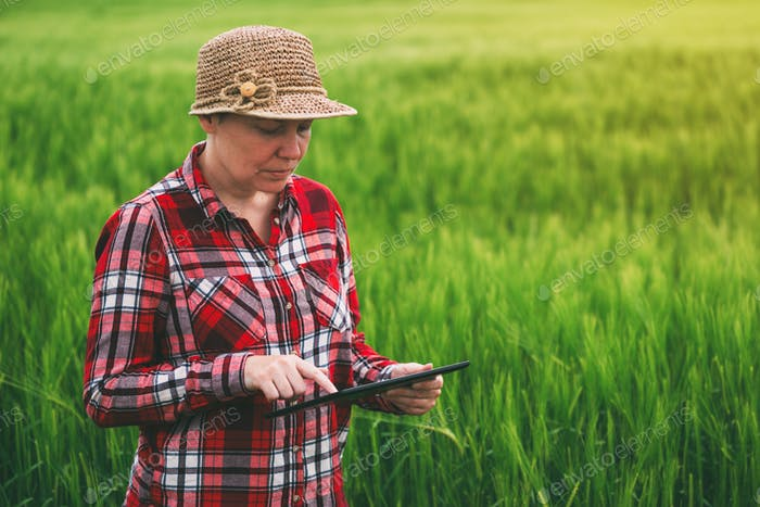 Weibliche Landwirte mit Tablet-Computer in Weizen Erntefeld